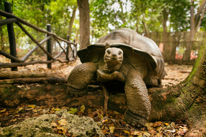 zero is your hero_tortoise hare analogy in retirement
